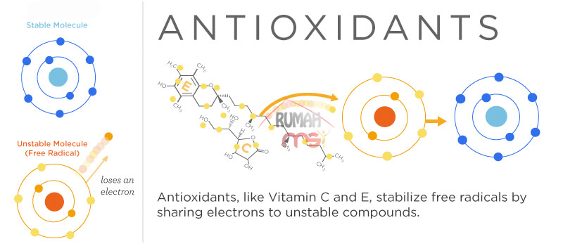 Antioxidants Work